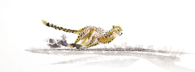 Cheetah-chase