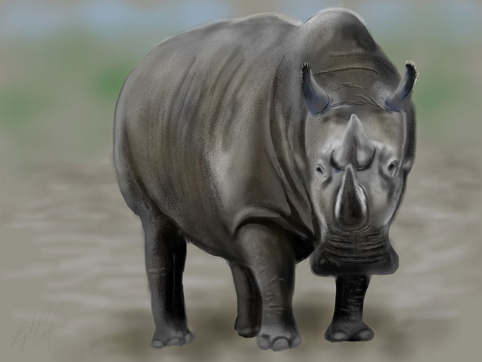 iPad Painting of a Northern White Rhino