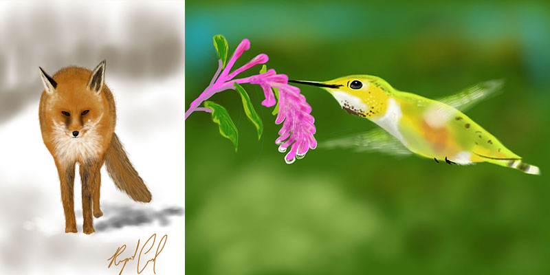 hummingbird and fox illustrations