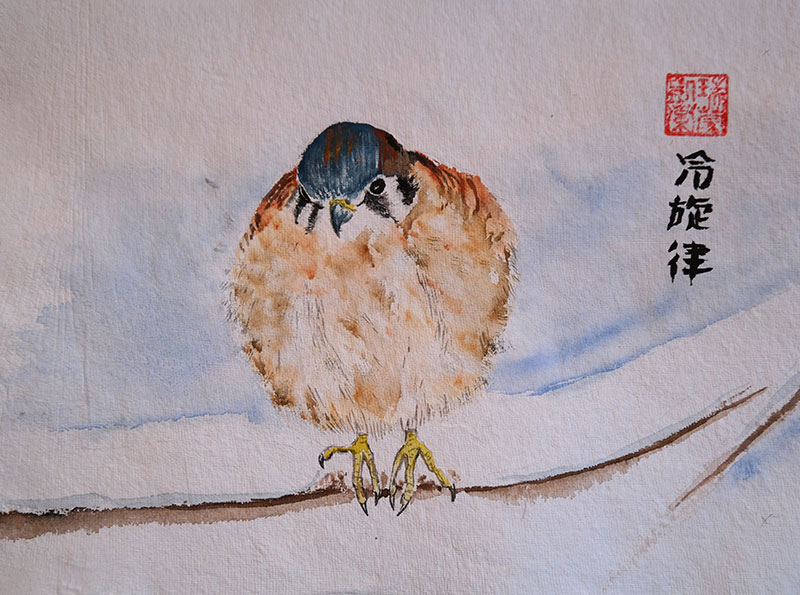 Painting of a female American Kestrel puffed up to stay warm