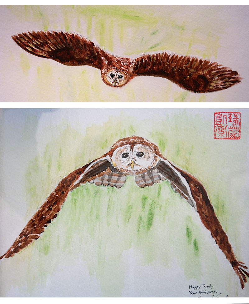 Two paintings of a Barred owl in flight